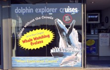 Dolphin Explorer Cruises Sign